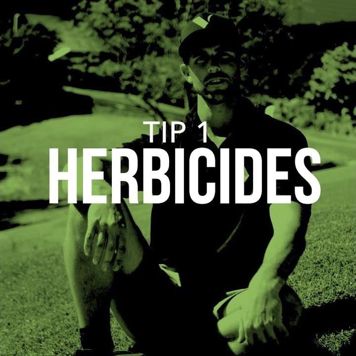 Lush lawn tip 1: herbicides